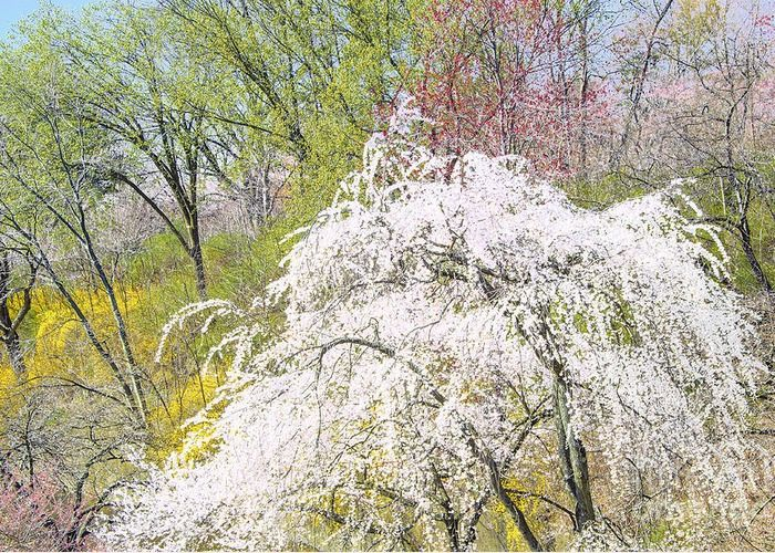 Spring Landscape New Jersey Greeting Card For Sale By Regina Geoghan Spring Landscape Landscape Blossoms Art