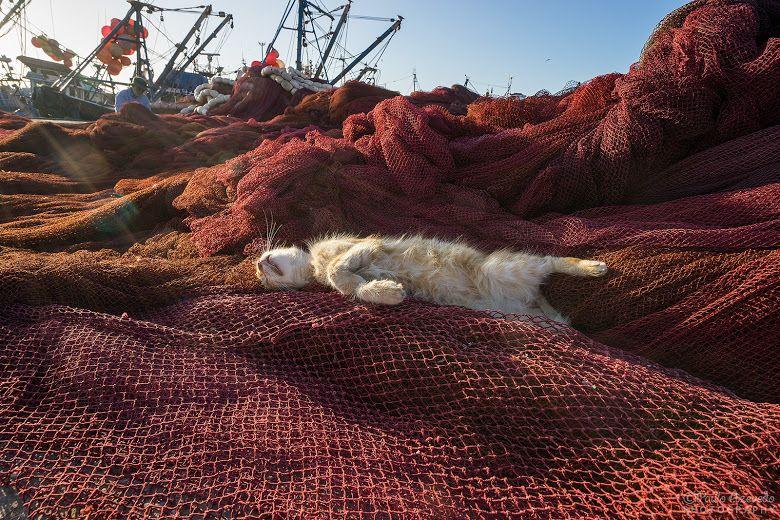 Os gatos de Marrocos [Fotogaleria]   Viagens à Solta
