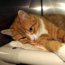 Adopt Orville On Animal Shelter Pet Adoption Adoption