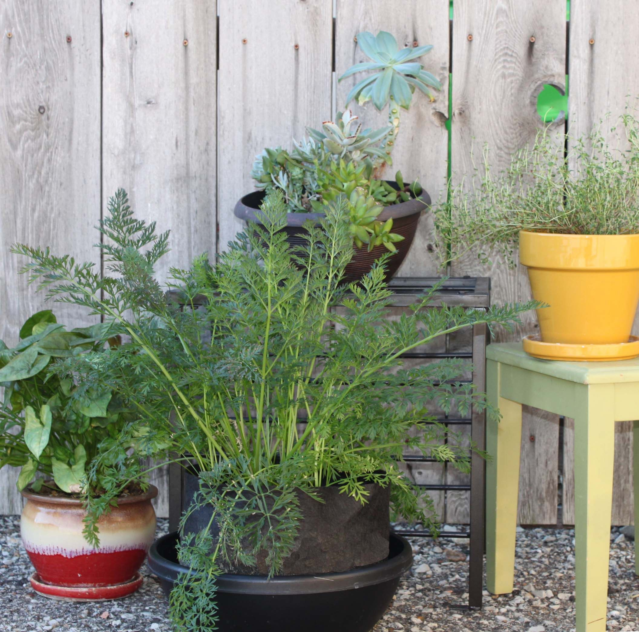 Container Gardening #hydroponics #soillessgardening Carrots In A Smart Pot  Http://stores