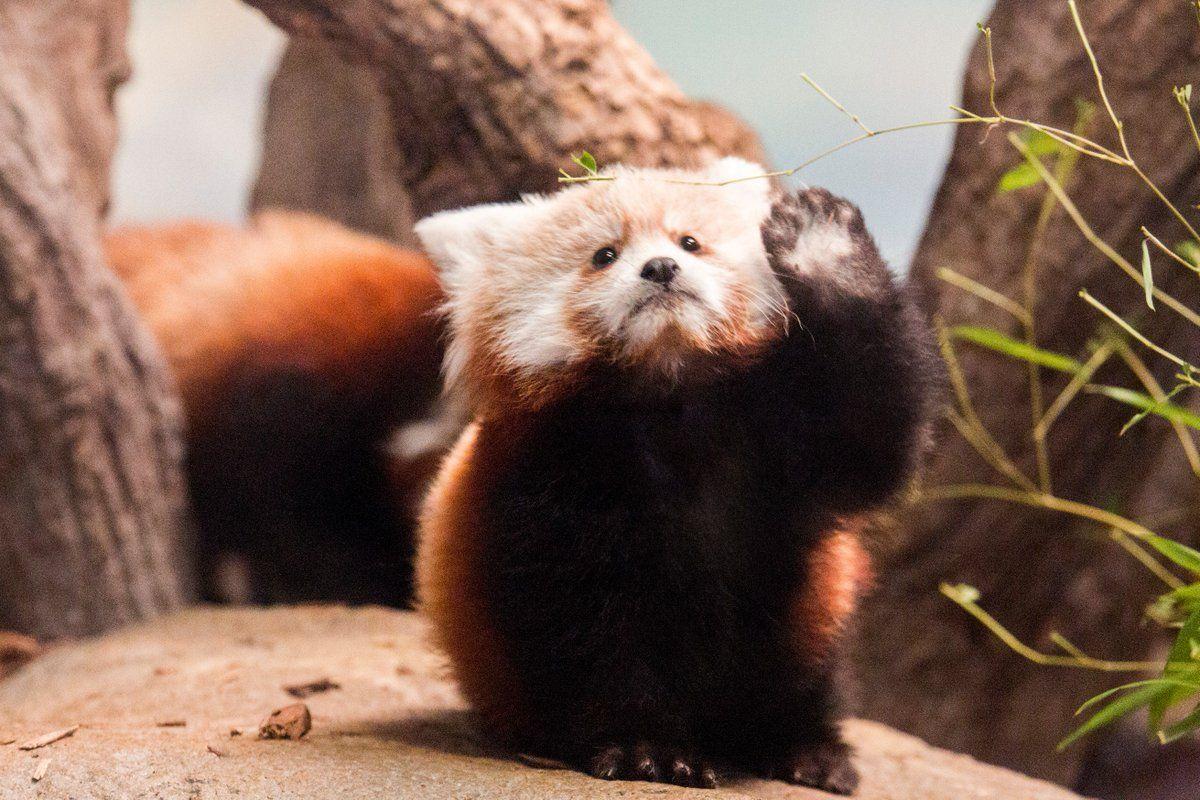 2020 FreeAdmission Days Denver Zoo, Botanic Gardens, and