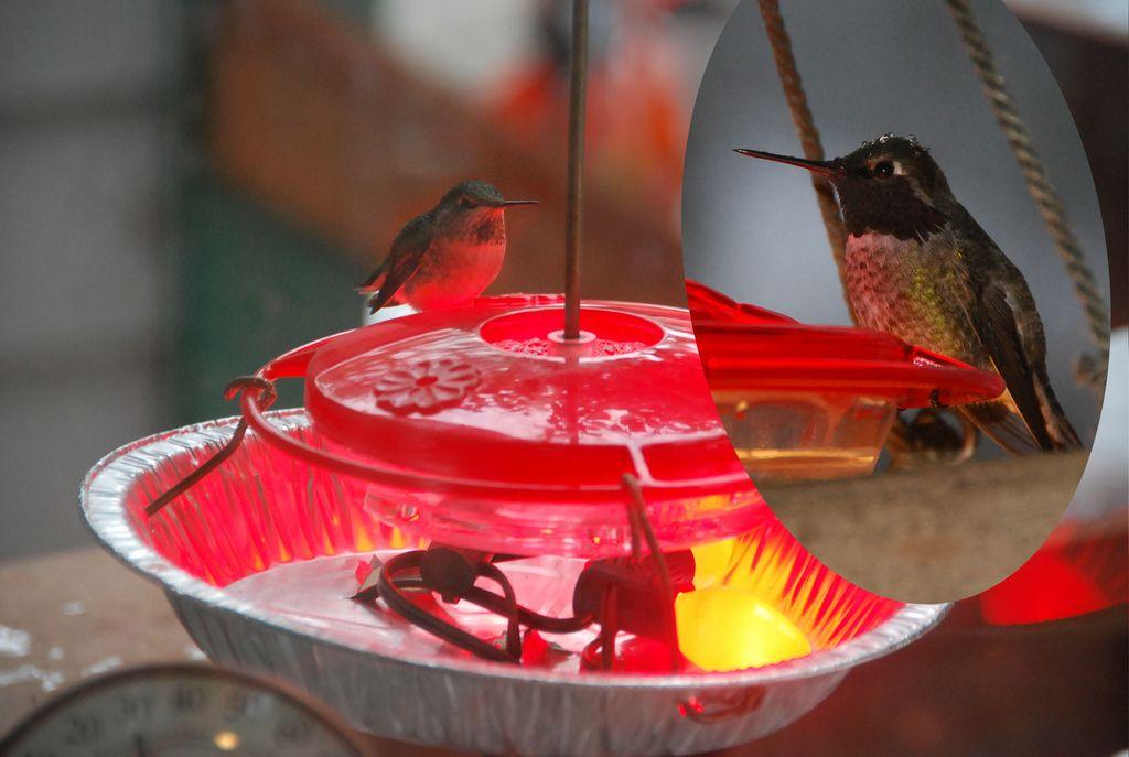 Hummingbird Feeder Heater Humming bird feeders