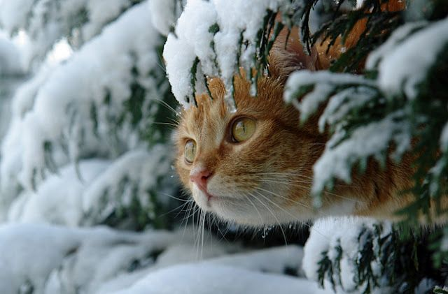 Cat hiding under a tree - Snow - Winter
