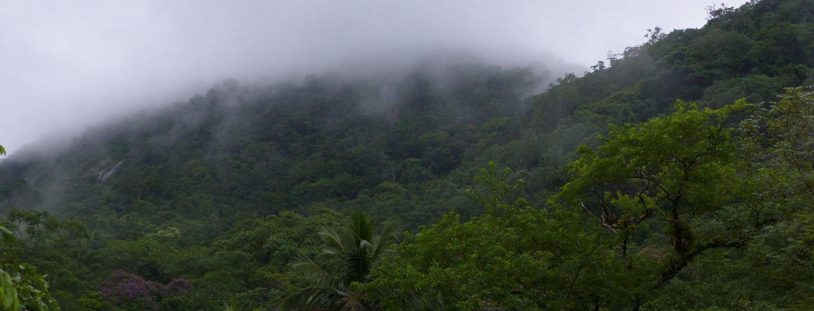A beleza da floresta Atlantica de Caraguatatuba.