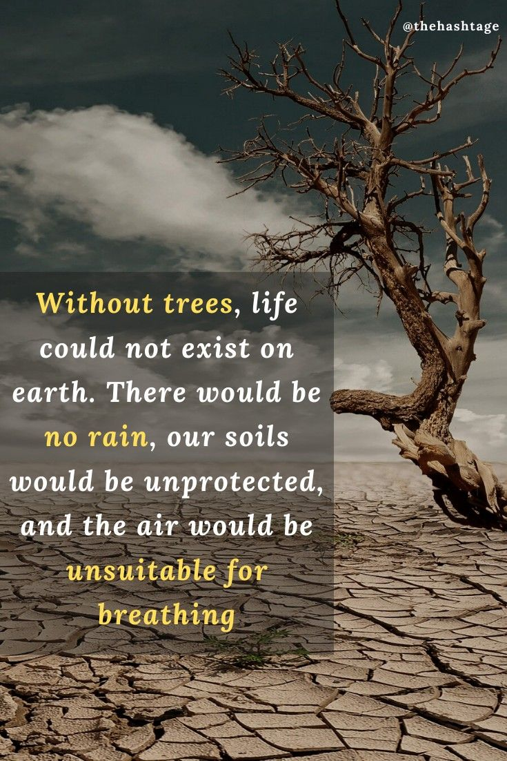 Tree's are most important thing for our lives . Like if you agree . Follow @thehashtage . . . . . . . . . . . .  . . . #trees #treeoflife #ecofriendly #life #earthpix #motivation #nature #naturelovers #hashtage #travellers #earthlandscape #plants #tree_shotz #worldshotz #insta #alps #plantbased #planetearth #savenature #savetheplanet #plantatree #beautyofnature #mothernaturerocks #mothernature