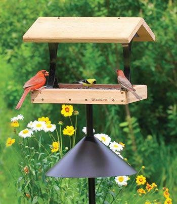 Squirrel Proof Platform Package Wooden Bird Feeders Bird Feeder Plans Large Bird Feeders