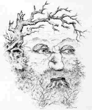 13 Faces In Tree Illusion