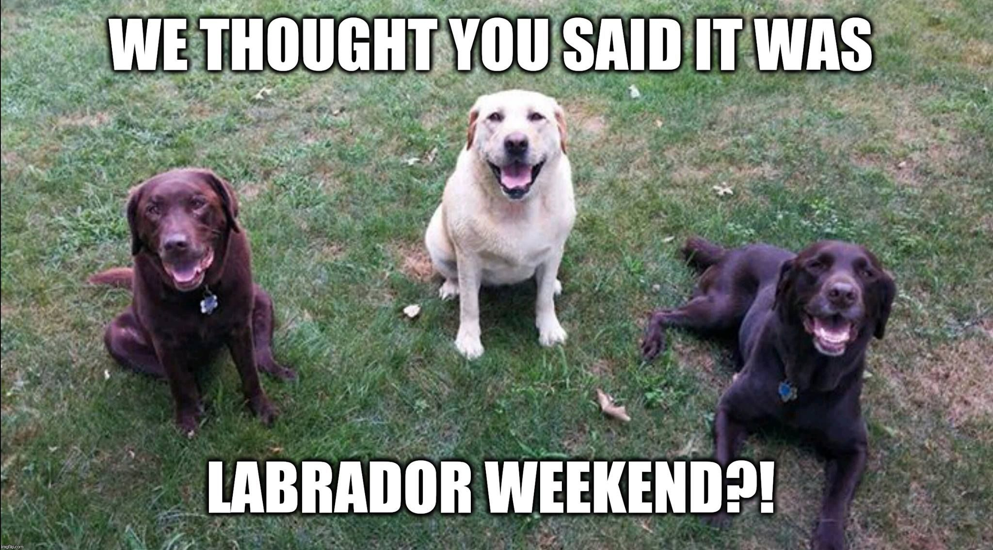Happy Labor Day Lab Dogs Funny Labrador Dog Labor