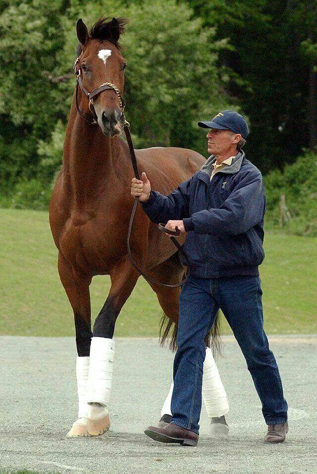 Barbaro Race Horses Horses Beautiful Horses Thoroughbred