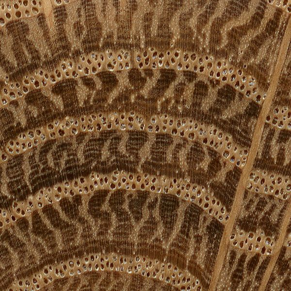 Wood Grain Print Rug: Image Result For Black And White Wood Grain Patterns