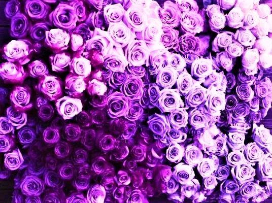 Flores Lilas Con Rosas Sobre Fondo: Fondo De Pantalla Para Pc En 2019