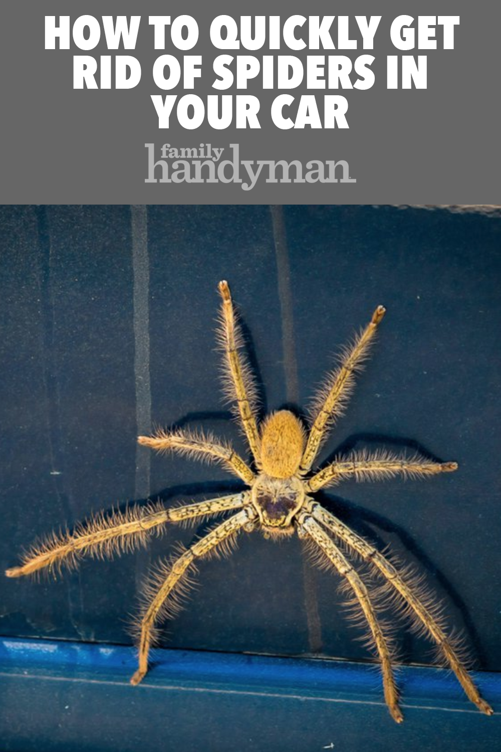 6b537aa9d365c5be4b5e8f9907fbdedb - How To Get Rid Of Spiders From Your Car