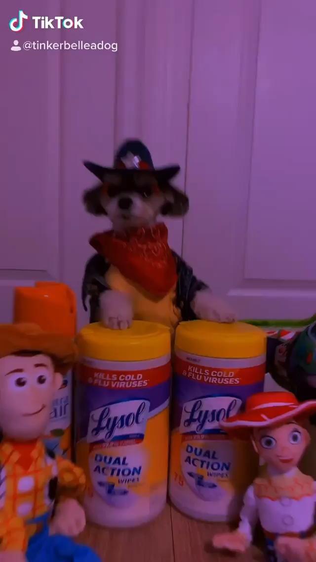 DJ Funny Dog Video #funnydogs #dogs #dogvideo