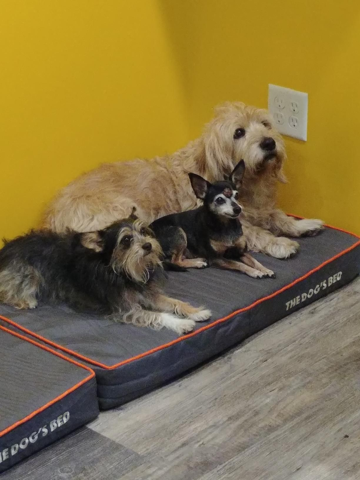 Pillow can relieve your pet's aches and pains. It is great