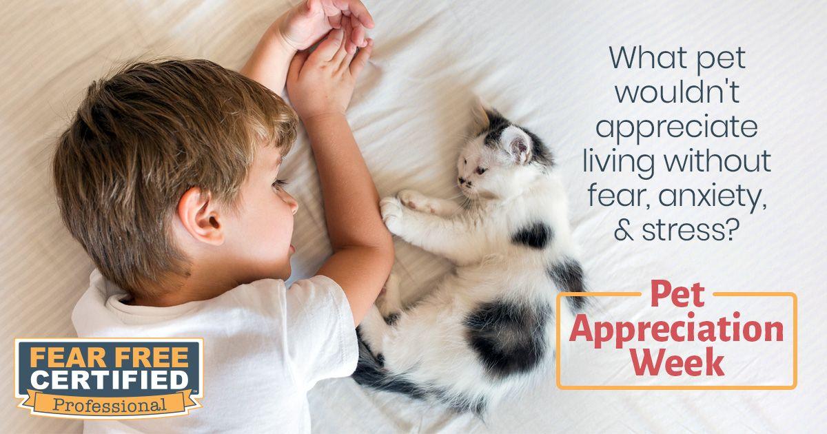 Its pet appreciation week your pet fear pets