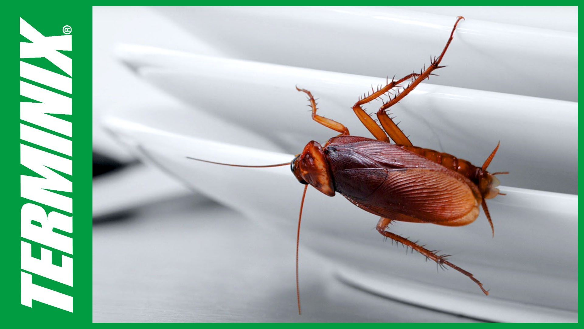 Are you having roach problems at your place of business