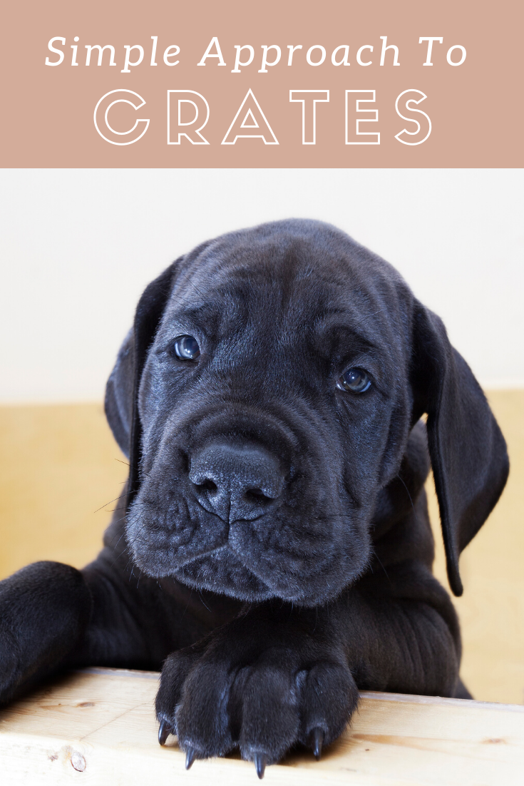 Great Dane Puppy Crate Training Crate Training Puppy Great Dane Puppy Great Dane Crate