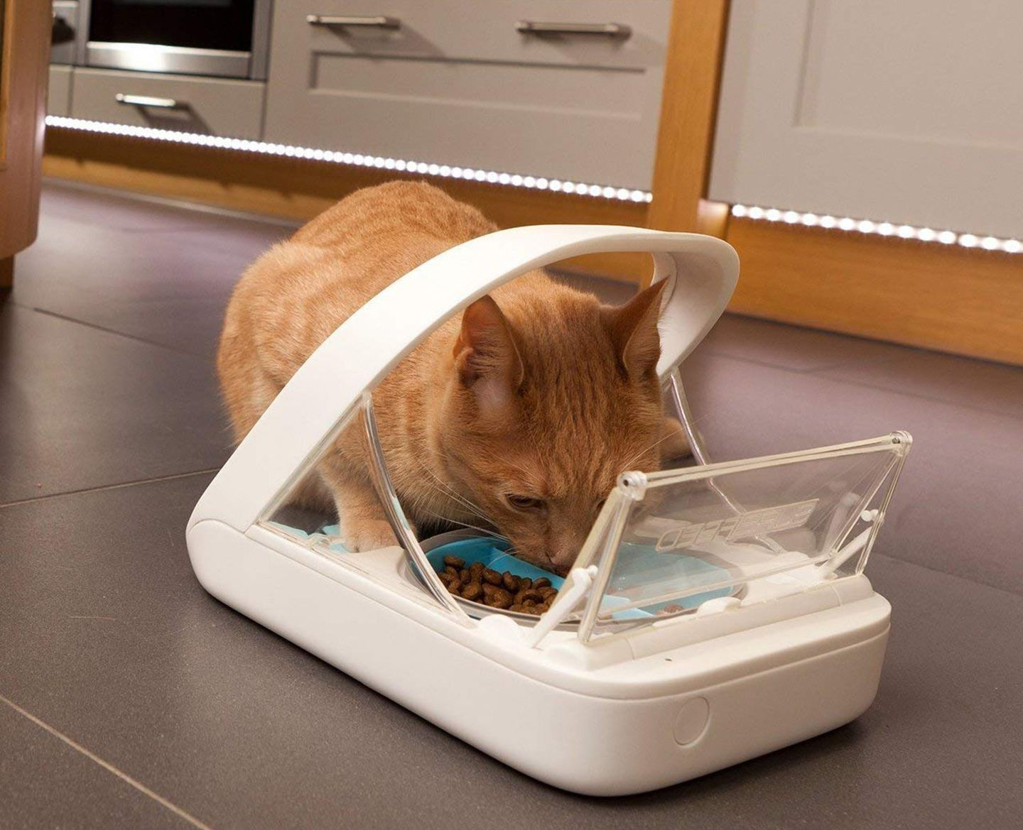 10 Gifts for Pet Lovers in 2020 Pet feeder, Cat food