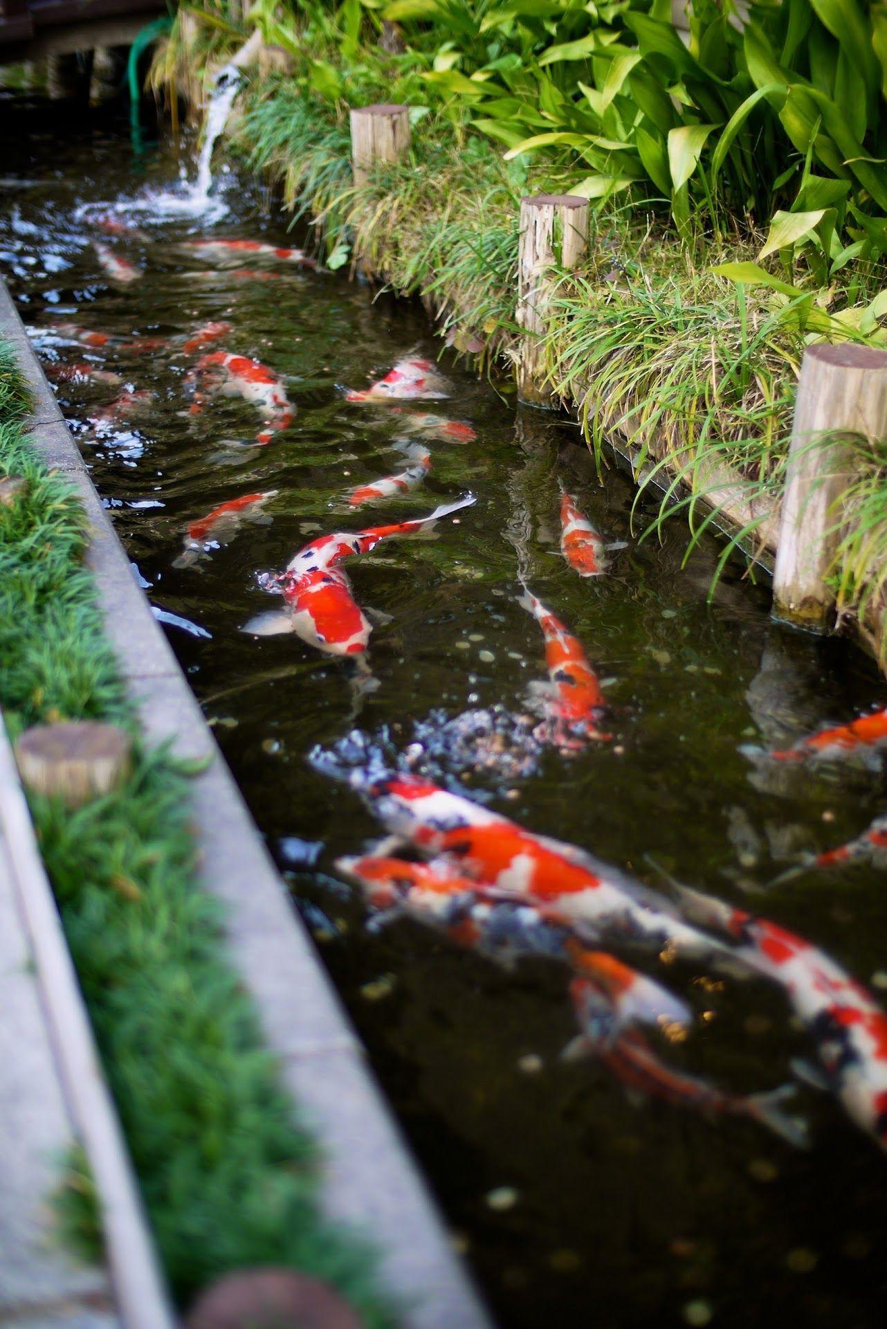 Photo in scrapbook photos google photos casa y jard n for Estanques japoneses jardin