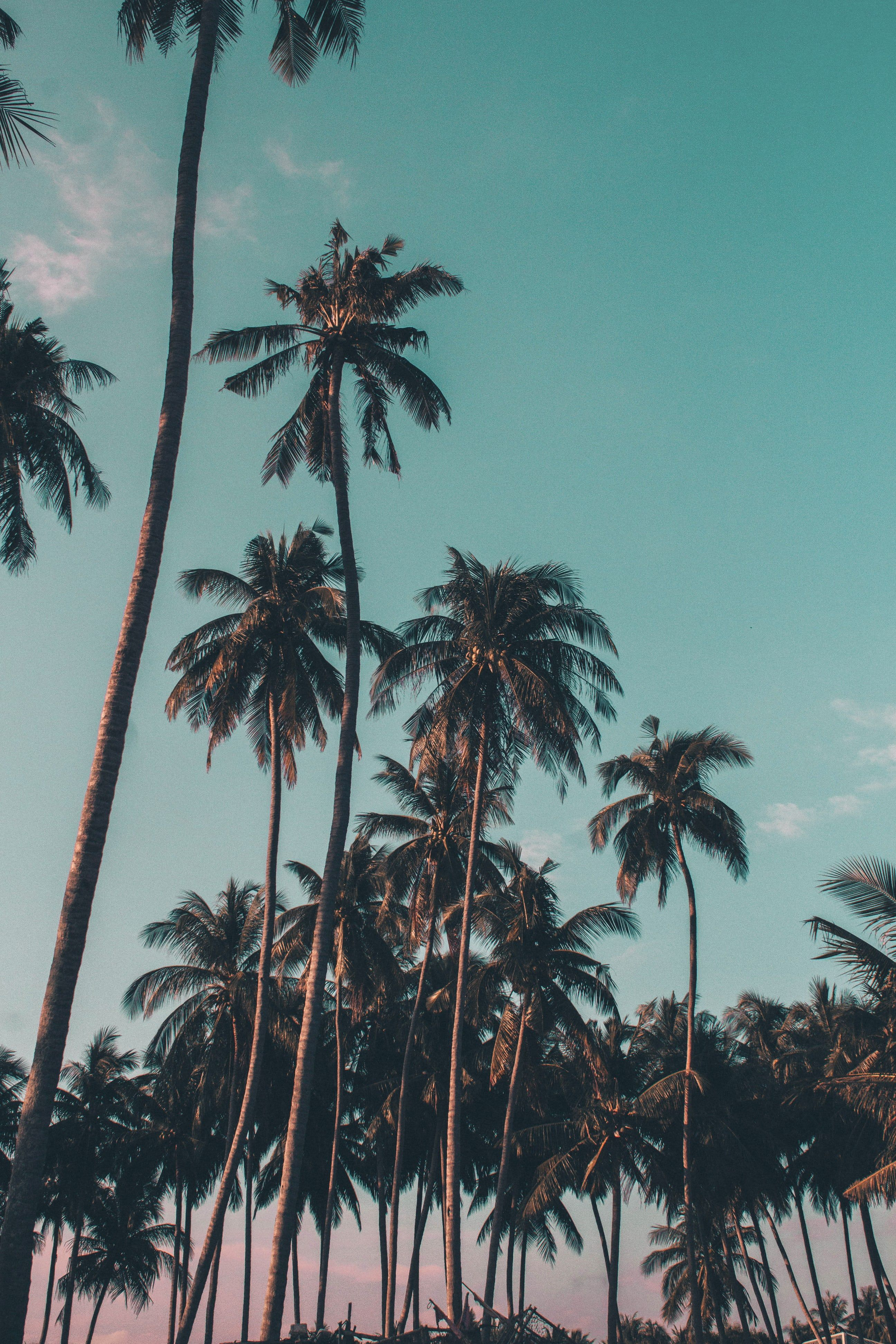 Best 100 Tropical Pictures Download Free Images On Unsplash Palm Trees Wallpaper Tree Wallpaper Backgrounds Wallpaper Iphone Summer