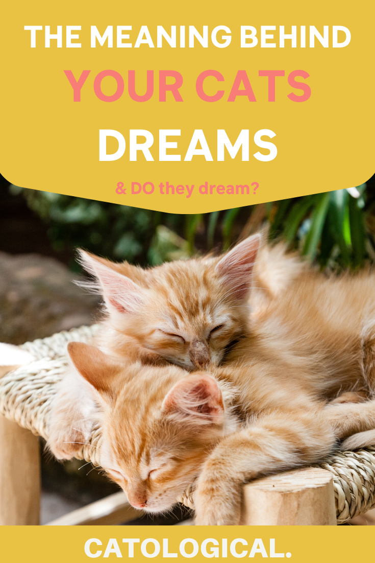 Do Cats Dream Can They Have Nightmares In 2020 Cat Care Cat Behavior Cats