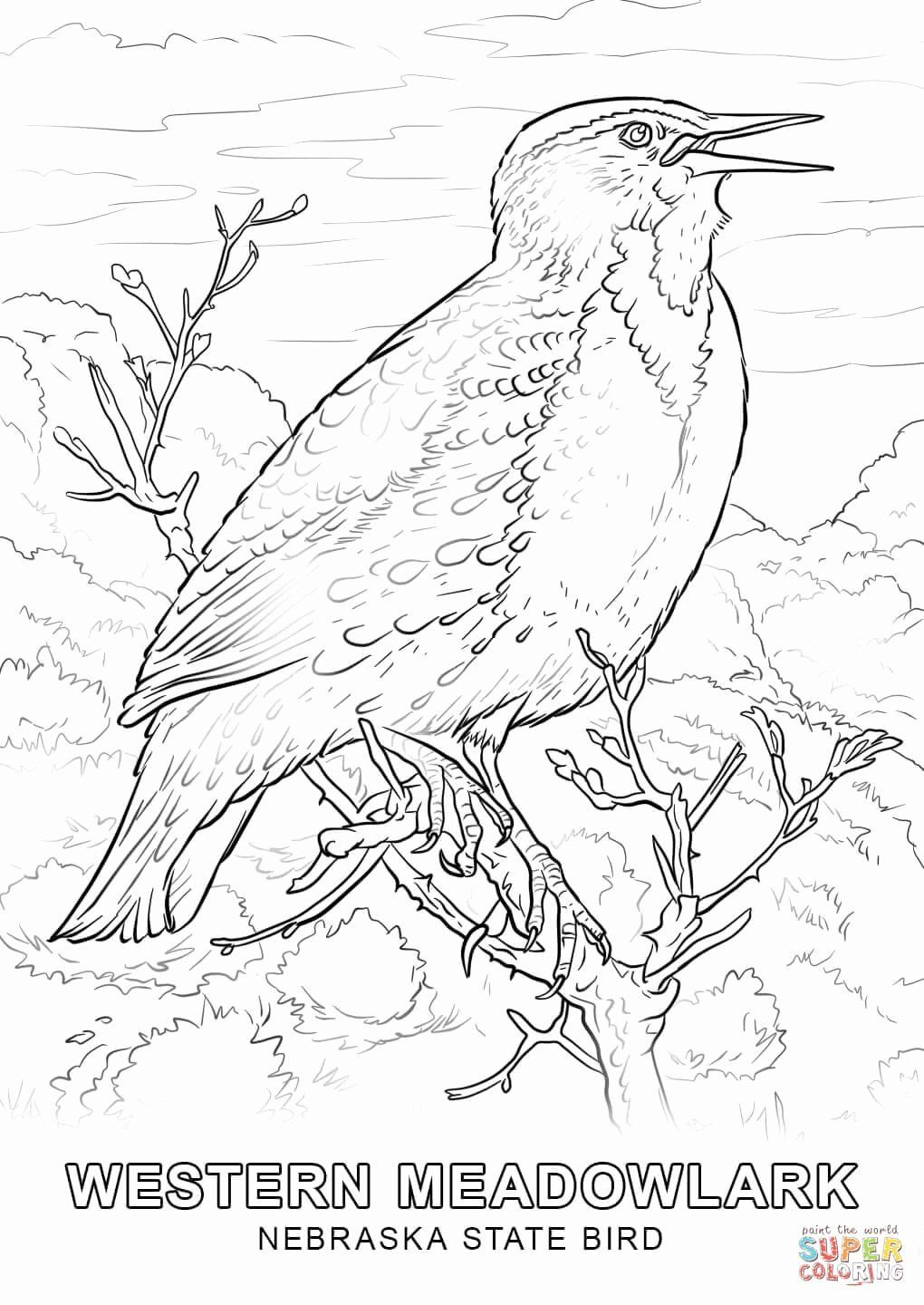 Montana State Flag Coloring Page Unique Nebraska State Bird Coloring Page In 2020 Bird Coloring Pages Flag Coloring Pages Flower Coloring Pages