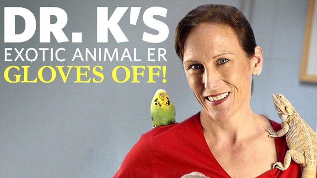 Dr  K's Exotic Animal ER: Gloves Off TV Show on Nat Geo Wild