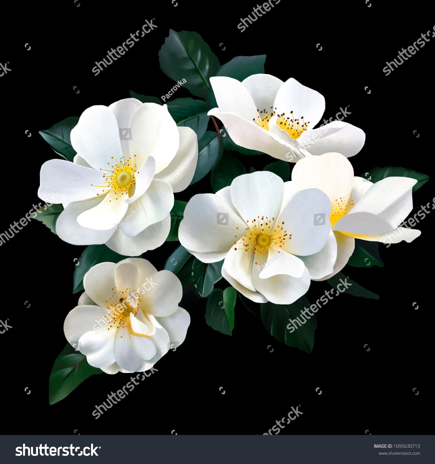 A bouquet of luxurious white roses on a black background rose is a