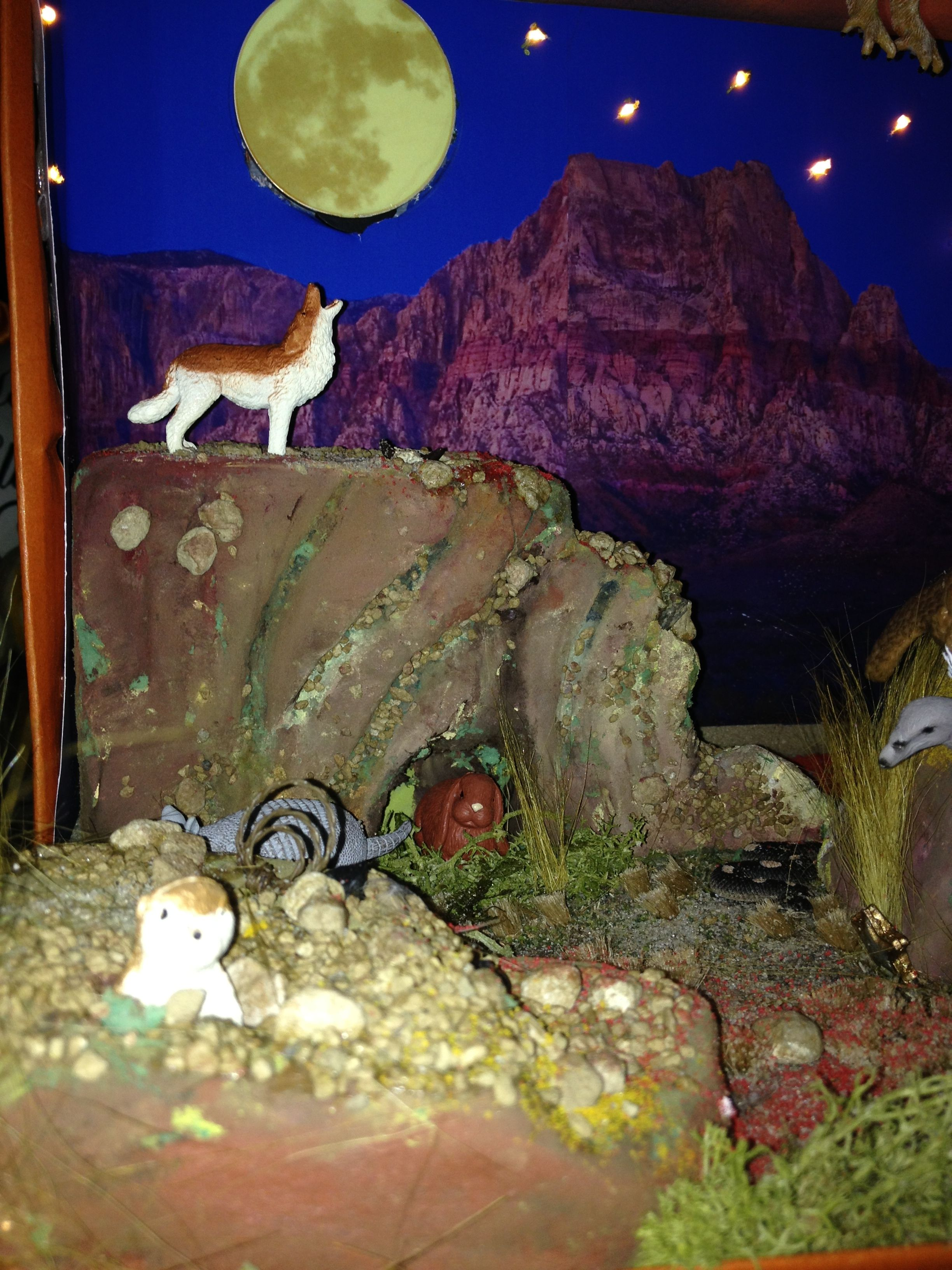 Shoebox Desert Diorama Wolf Howling At The Moon 3rd Grade School Project