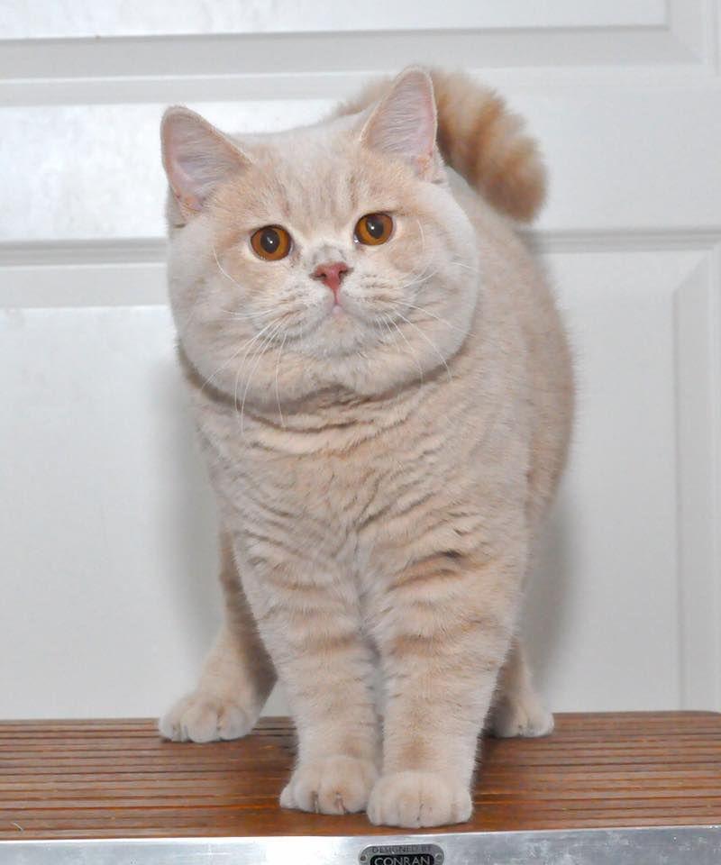 Blonde Beauty Fluffy Kittens Cute Cats Kittens