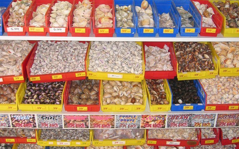 Florida shell shop sea shells treasure island florida