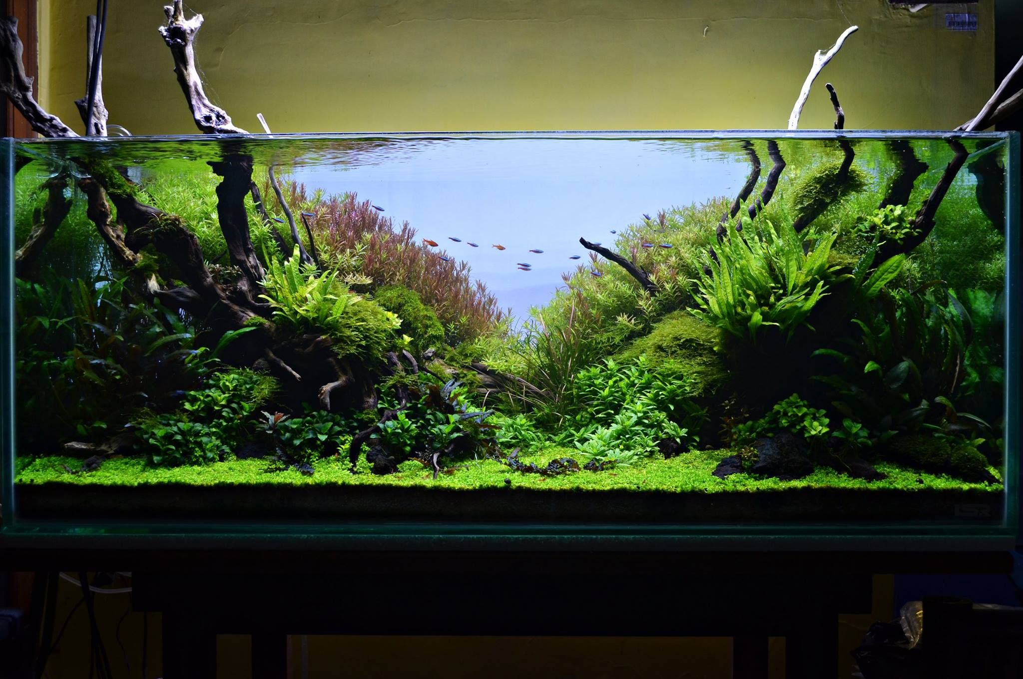 6b591132b35002fc05da91ccdb44a52d Frais De Aquarium Tropical Schème