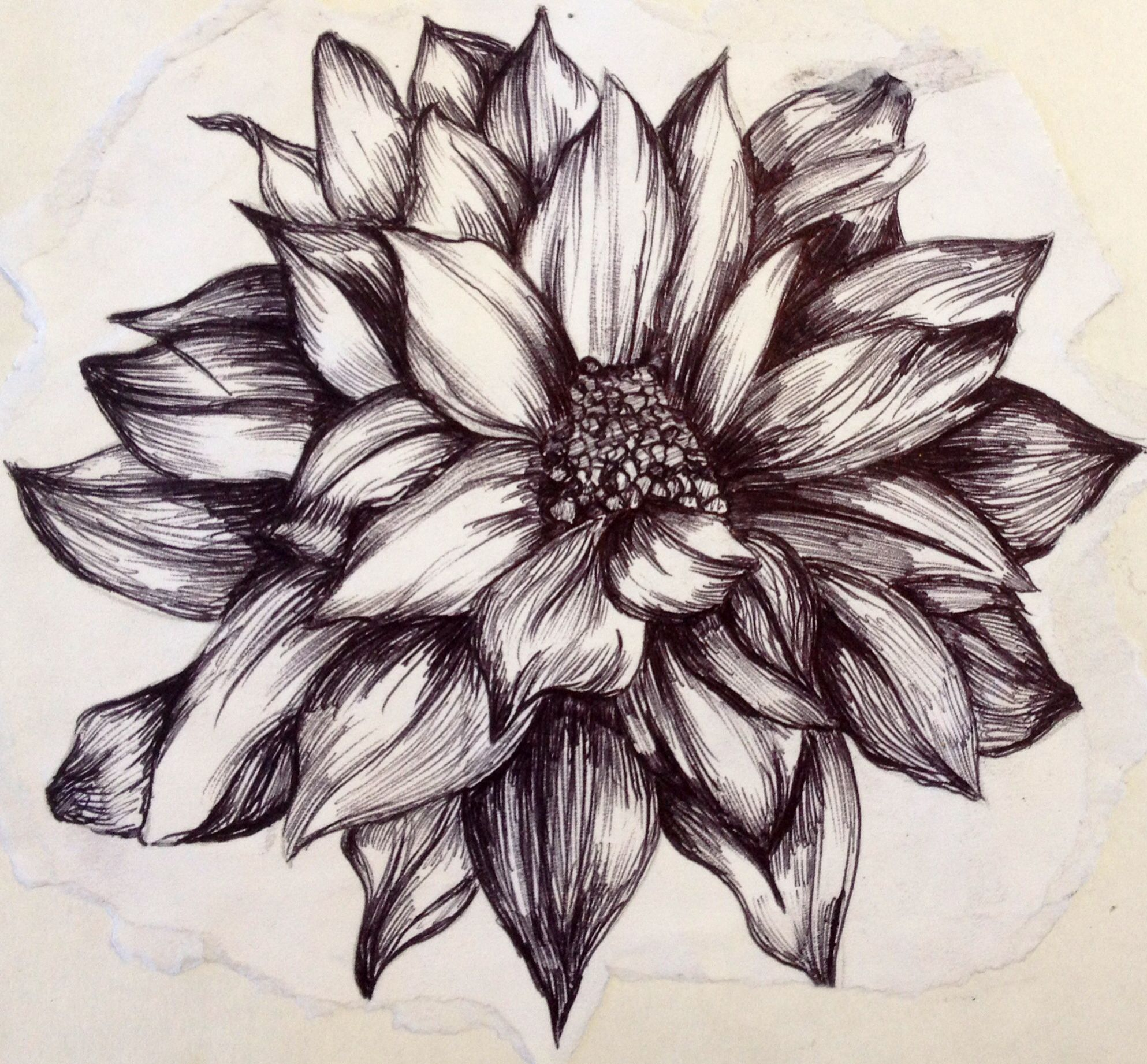 Flower illustration created with biro black pen pen