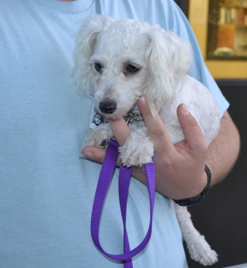Puppies for adoption near kansas city