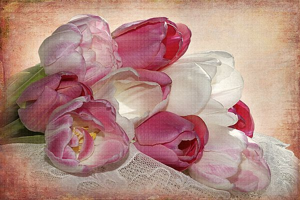 http://fineartamerica.com/featured/sweet-tulips-phyllis-denton.html