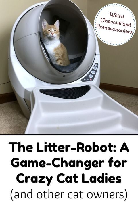 The Litter-Robot: A Game-Changer For Crazy Cat Ladies (and