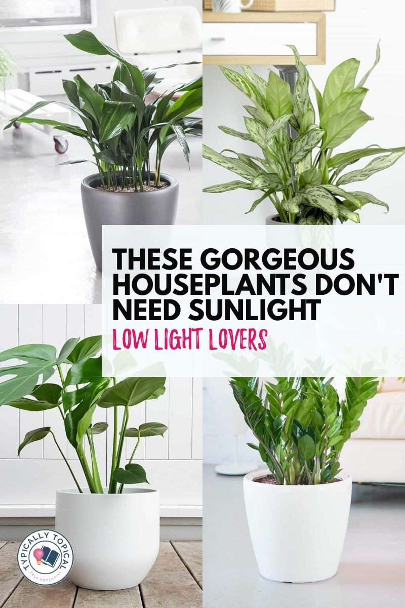 10 Of The Best Indoor Plants That Don T Need Sunlight Typically Topical In 2020 Best Indoor Plants Plants Small Herb Gardens