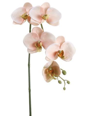 Phalaenopsis silk orchid spray in peach cream375 blooms x 26 tall phalaenopsis silk orchid spray in peach cream375 blooms x 26 tall mightylinksfo