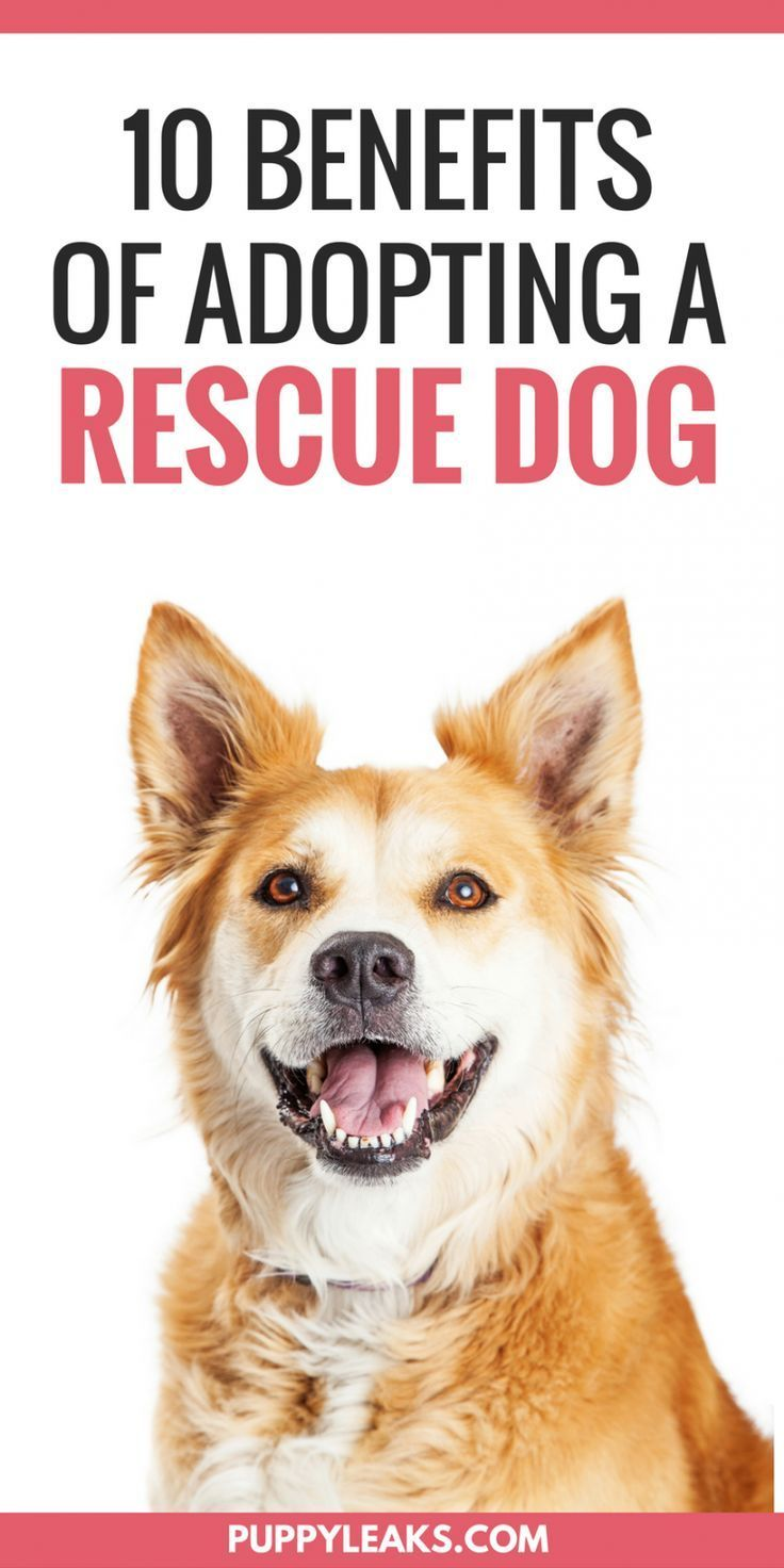 10 Benefits of Adopting a Rescue Dog Rescue dogs, Best