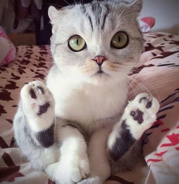 どの子が好き?ネコ派は悶絶必至の可愛い子猫ちゃん写真その2 60枚