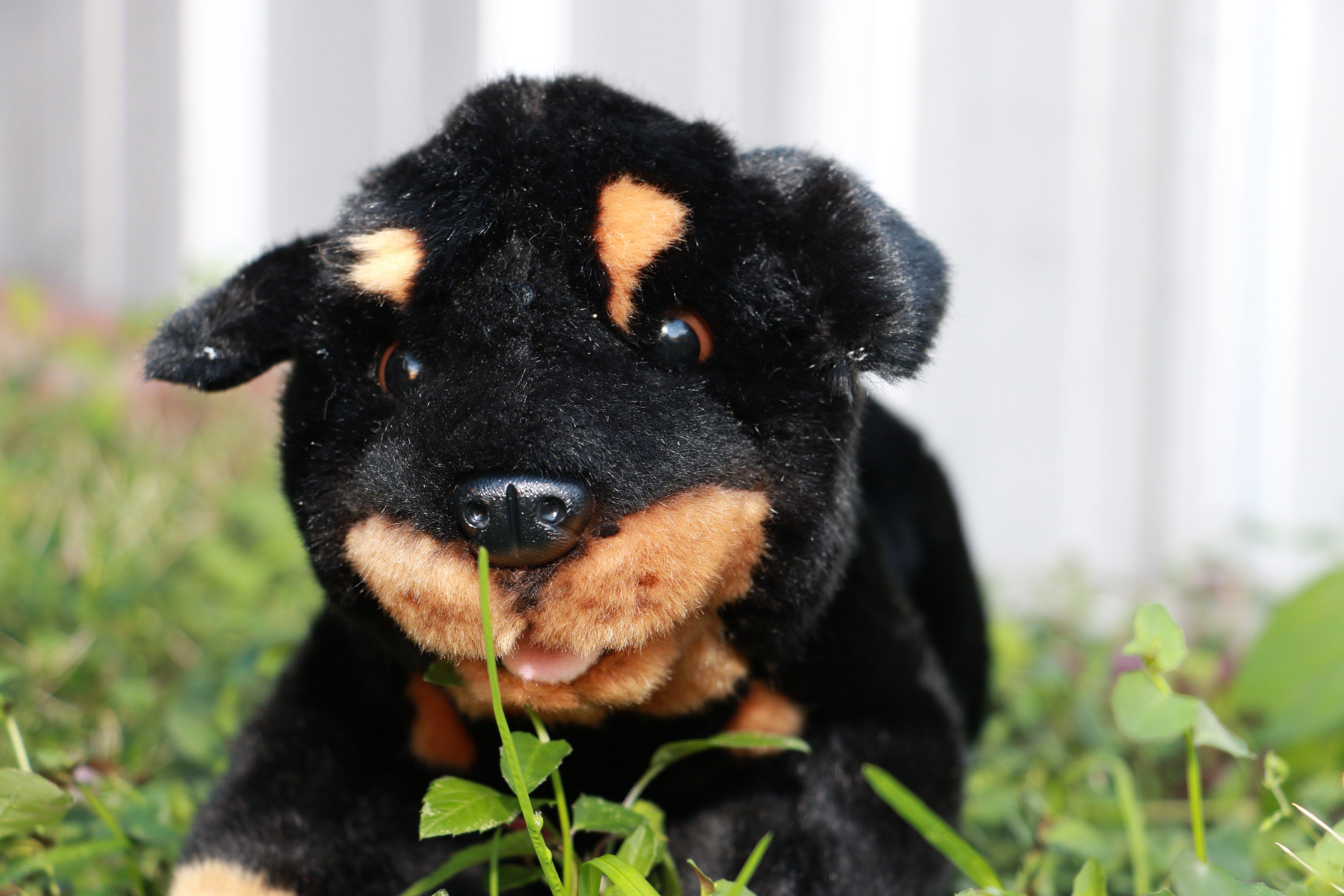 Bocchetta Plush Toys Rottweiler Puppy Plush Dog Toy Realistic