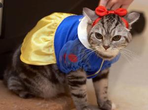 snow white cat costume pet costumes cat halloween costumes pets - Halloween Costumes For Kittens Pets