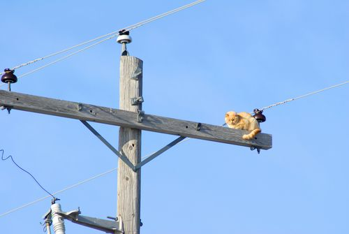 How To Birds Not Get Electrocuted On Power Lines