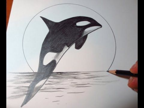 How to Draw a Killer Whale | How To Draw A Killer Whale ...