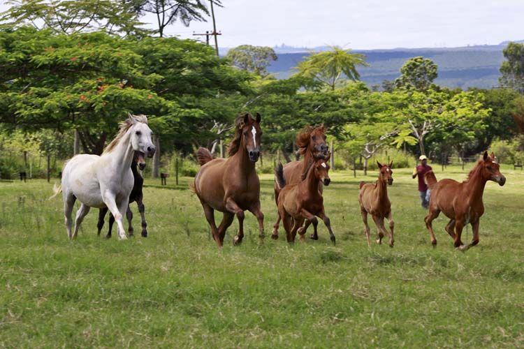 بيت آر إف آي مكتوب مقابلة مع مالك مزرعة هاراس آر إف آي لتربية الخيول العربية بالبرازيل Horses Arabian Horse Beautiful Pictures
