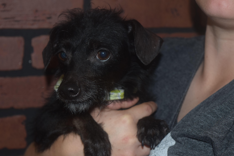 Adopt Janet On Pet Adoption Pets Pet Search