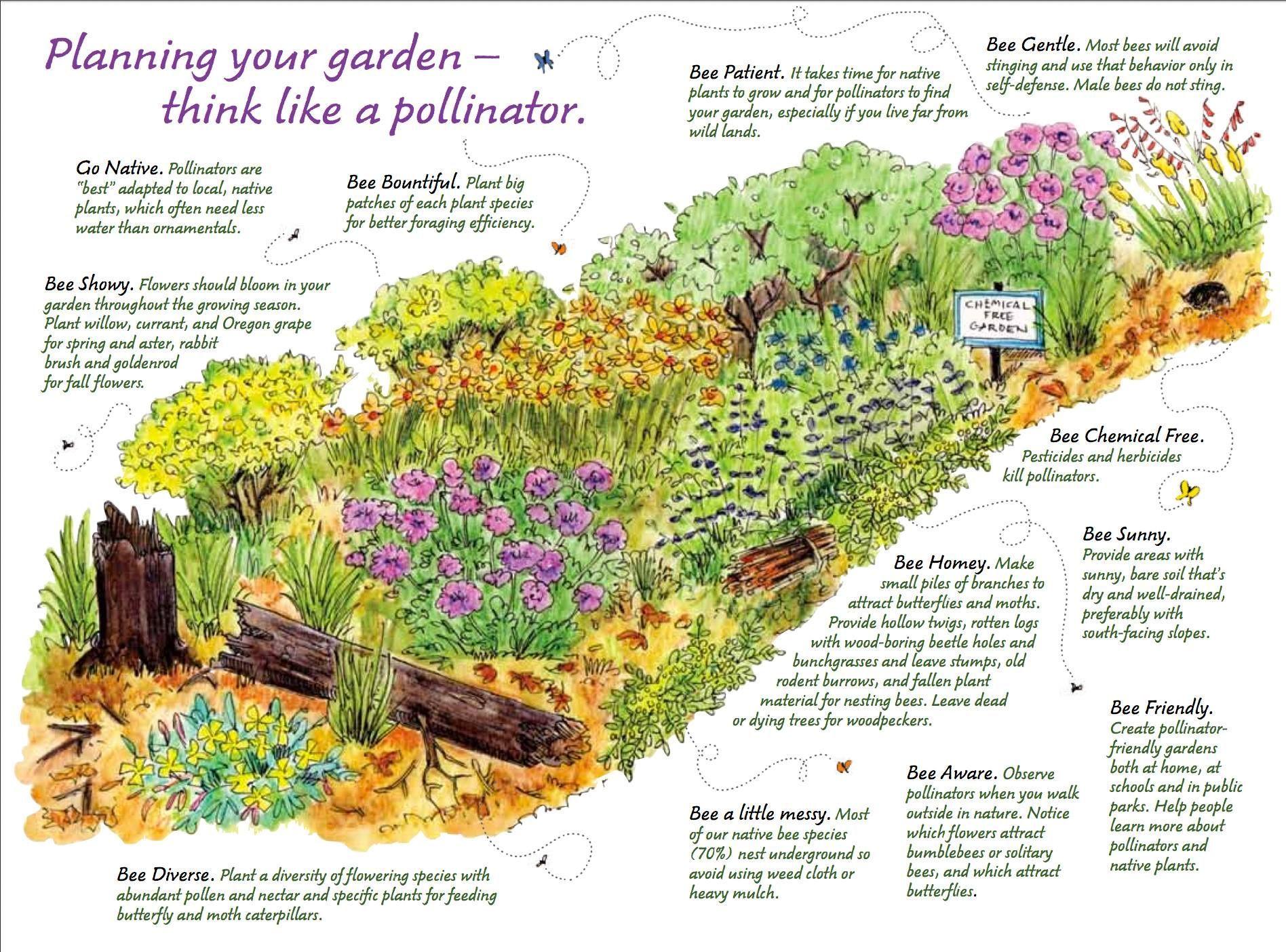 Image result for native pollinator garden design | Plants ... on native perennial garden, native wildflower garden, native plant garden, native bee habitat,