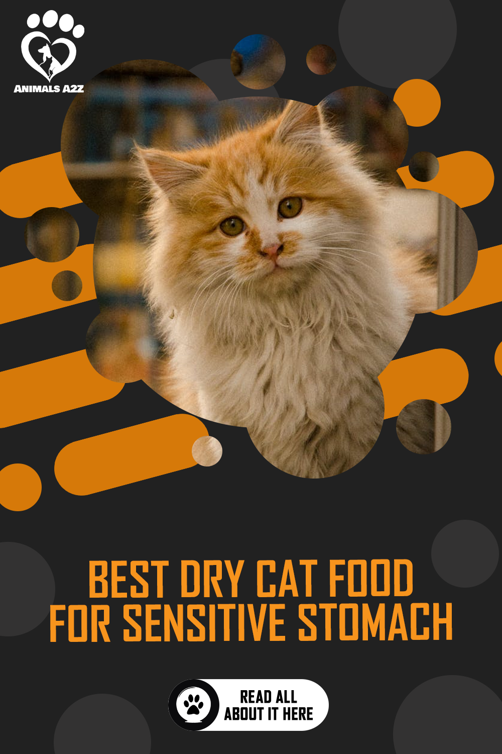 Best Dry Cat Food For Sensitive Stomach Detailed Answer In 2020 Dry Cat Food Cat Food Cat Care