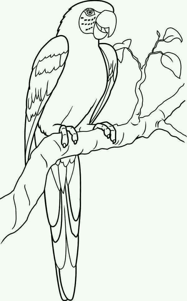 Pin By Elena Bueckert On Coloring Bird Coloring Pages Parrots
