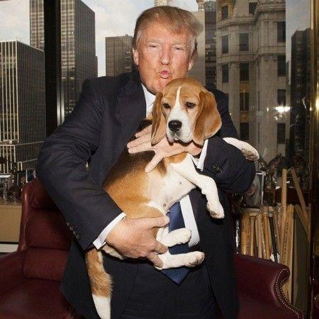 Gop Speechwriter Trump Should Support Wcw Beagle Puppy Trump